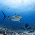   Shark BuddhaWhile working conservation preservation wonderful marine world weve met this young man heart sharks. He dedicates his life research when among friends you feel vibes sharks  